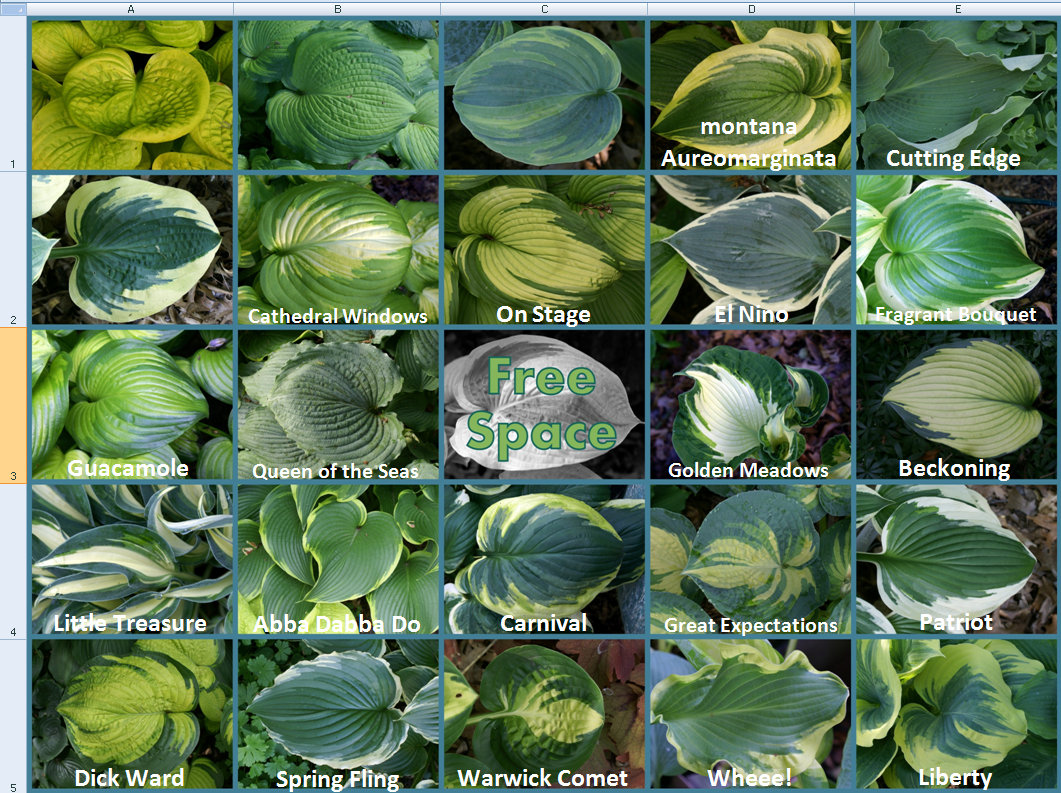 2014 Hosta Bingo - 3rd update