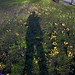 My shadow between lots of flowers (Look it big format)