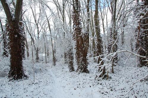 Ice storm Lexington Kentucky