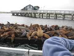 Show me the sea lions! IMG_0044_3