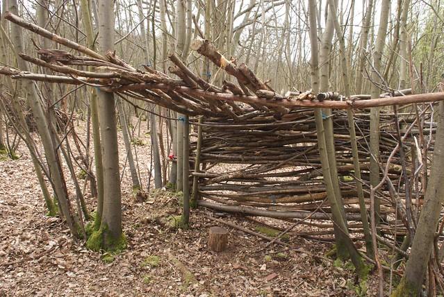 DSC_8236 woodland shelter