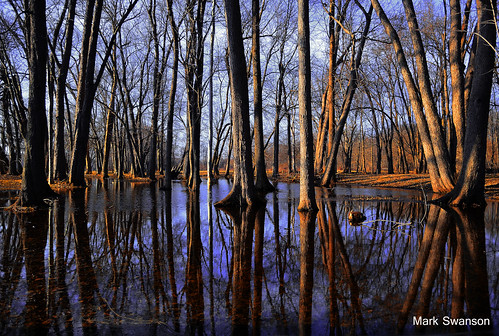 park trees sunset color forest spring nikon flood michigan trail polarizer circular d5100
