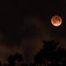 April 2014 Blood Moon Lunar Eclipse by Chris Martin | photosbychrismartin.com