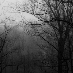 Lakeside Fog