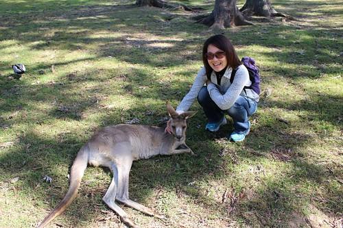 Lone Pine Koala Sanctuary  でカンガルーと
