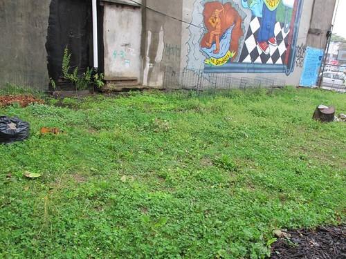 GreenSpace's Rain Garden