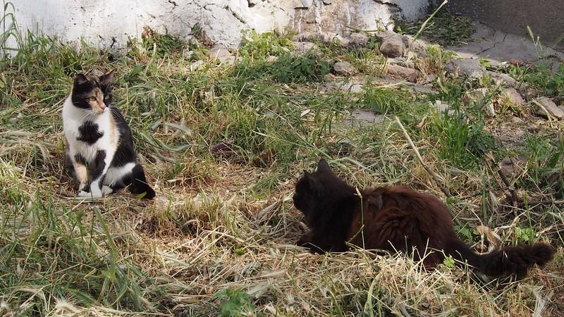 Cats of Balaklava