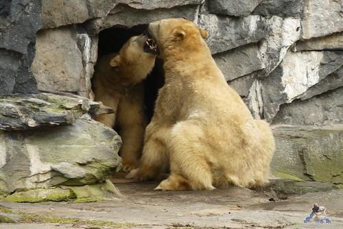 Tierpark Berlin 24.01.2015 152