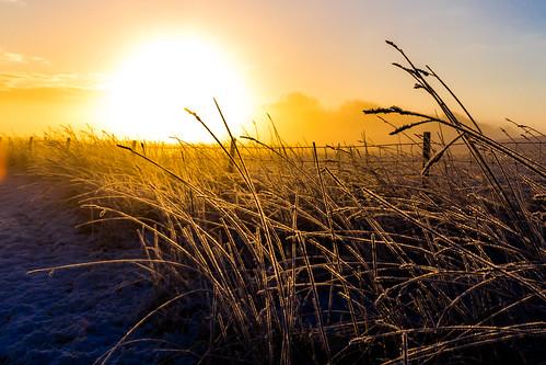 winter sun sunrise fence landscape denmark vinter jylland solopgang