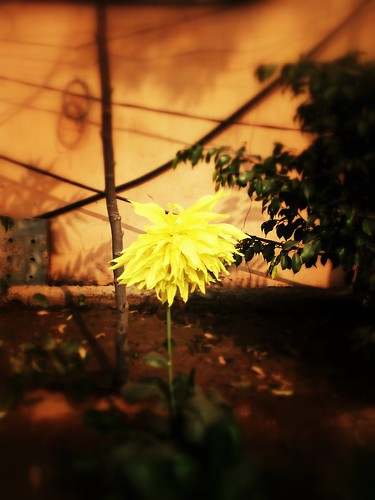 camera summer flower apple yellow flickr famous noon iphone faridabad