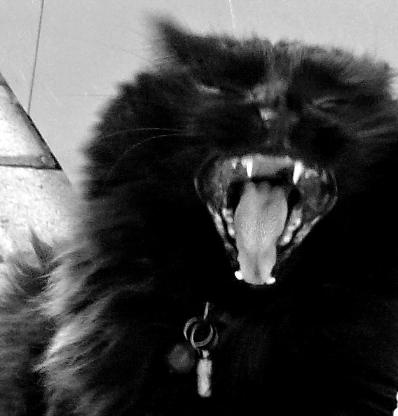 Nera yawning