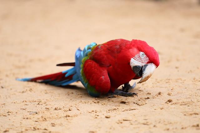 Parque das aves. Foz do Iguazu