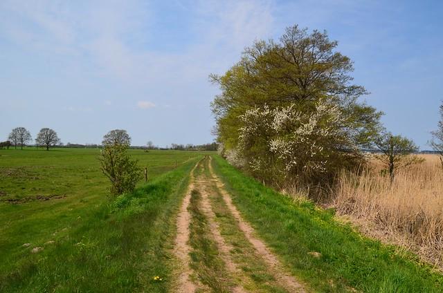Wanderweg zw. Grüssow und Warthe