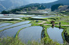 Photo:Terraced rice field By cotaro70s