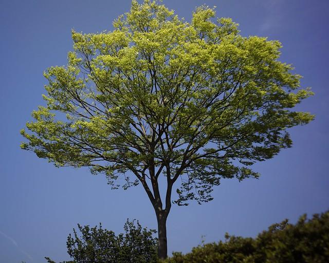 樹 夏の始まり