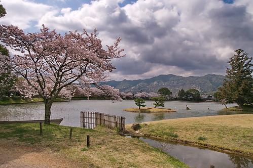 【写真】2013 桜 : 大覚寺/2020-09-15/IMGP9434