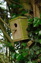 Maison pour oiseau