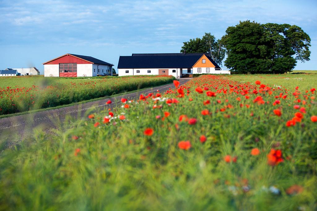 Olovsfält, Hammenhög, Skåne