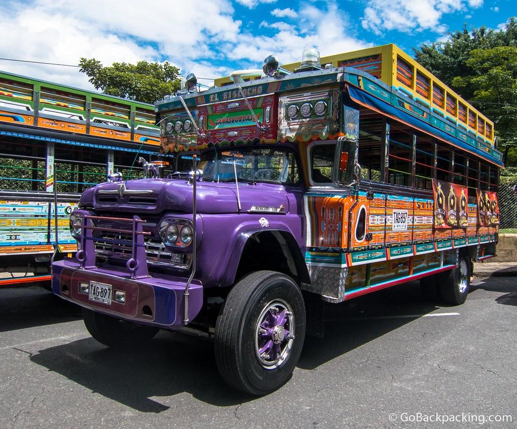 Purple chiva