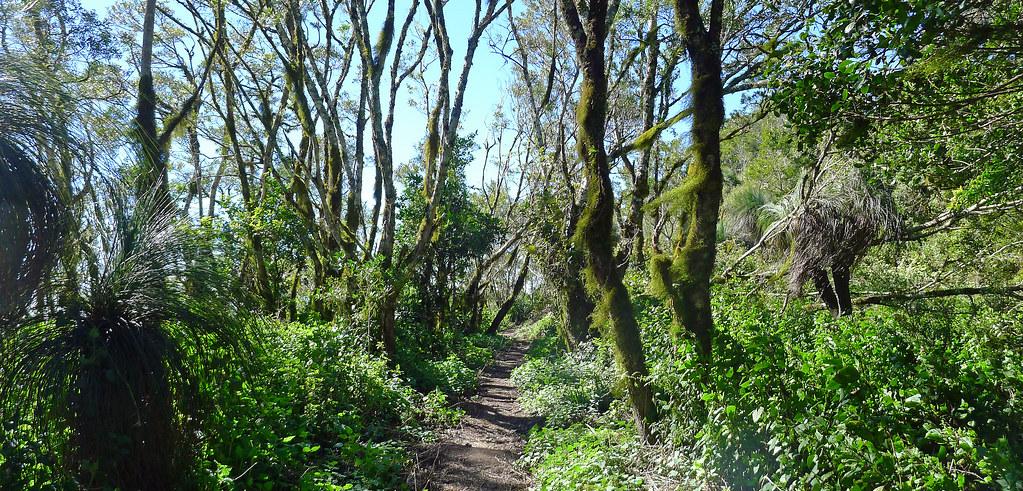 Mt Mitchell Track