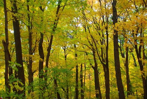 fall minnesota fallfoliage 2008 minnesotalandscapearboretum nikond80