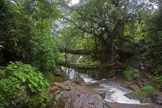 The Double Decker Living Root bridge in Meghalaya, India.