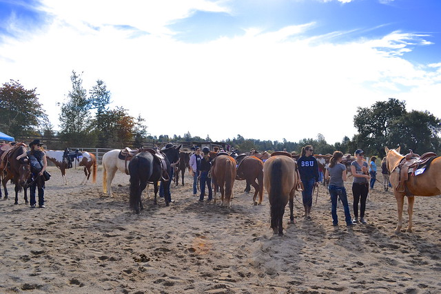 horse show weekend!