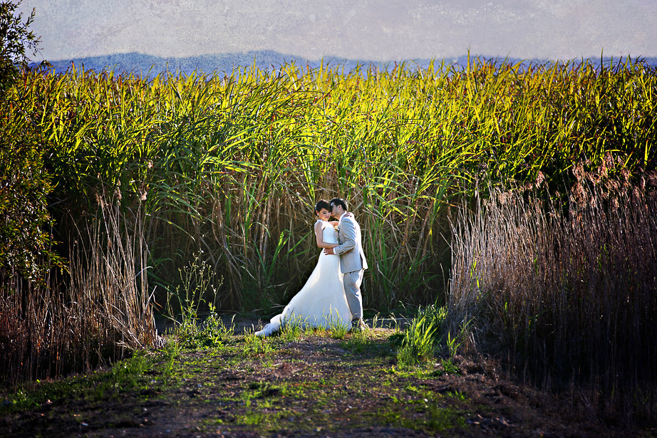 Sugar cane fields wedding photography