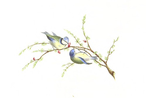 Image taken from page 142 of 'The Poetry of Birds, selected from various authors; with coloured illustrations. By a Lady'