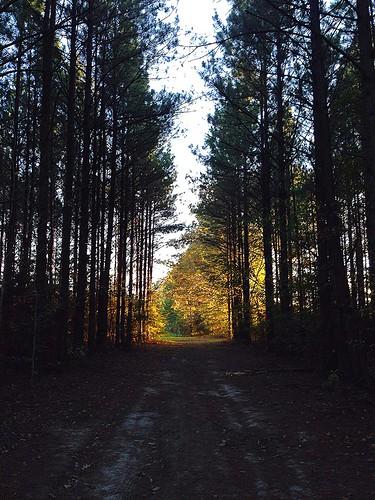 trees light shadow sun tree green fall grass sunshine golden woods bright trails tunnel