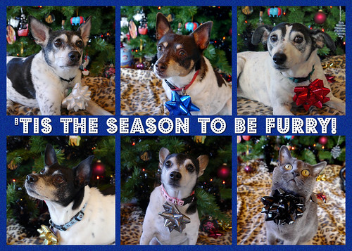 fsmas card 2013 - tis the season