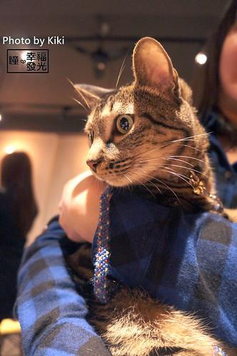 cat_5th (48)