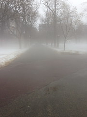 Foggy Boston Common