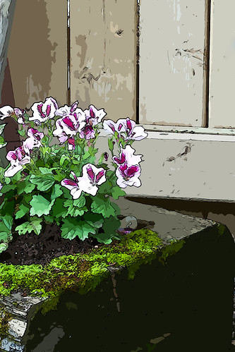 Geranium In Mossy Planter - Digital Artwork by Rustic Pixel
