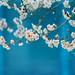 Spring burst by tanakawho