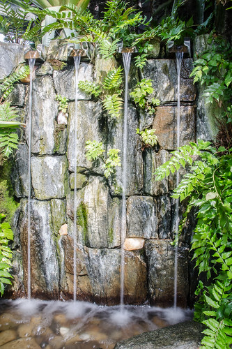 plant fern water waterfall unitedstates pennsylvania kennettsquare