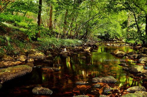 county trees ireland green leaves reflections river nikon rocks stream long exposure stones riverbed wicklow glencree knockree d5100