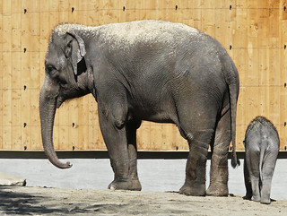 Goodbye, elephants : (