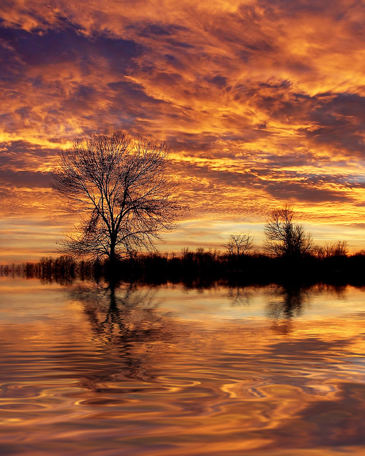 Sunrise, Water, Ripples, Sky, Trees, Lake, River, Flood