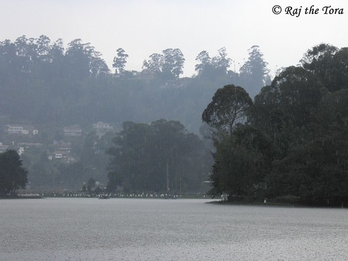Rain in Kodai Lake