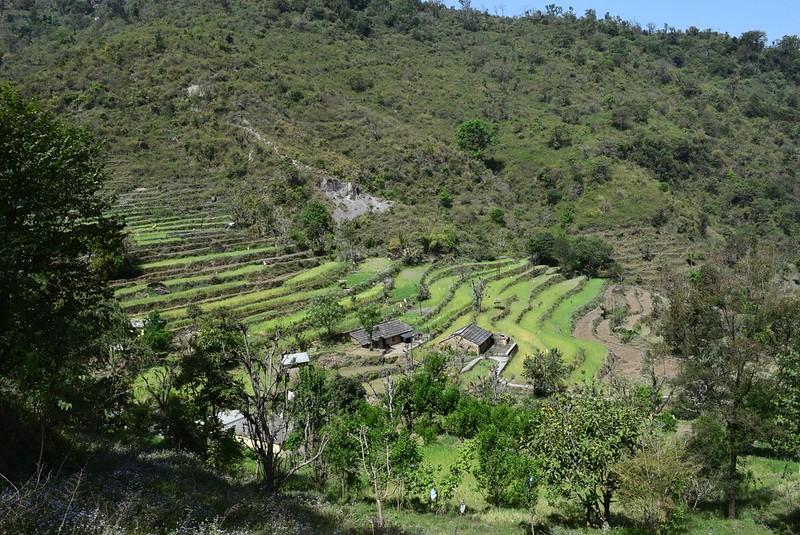 段々畑。生計は主に農業でたてているようです。