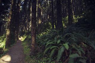 Prairie Creek Redwoods State Park, CA | Roland Krinner