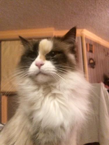 Sassy Kitty Cat