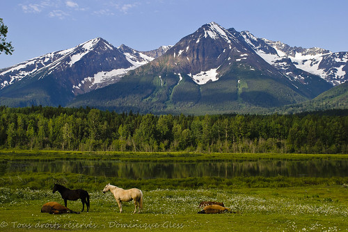 horses mountain canada nature montagne landscape nikon columbia british paysage chevaux yellowheadhighway colombiebritannique
