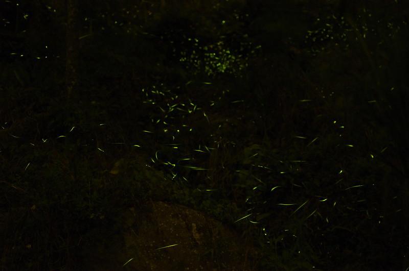 梅嶺螢火蟲