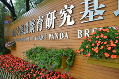 Cheng Du Panda Research Center