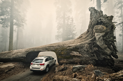 Sequoia Down