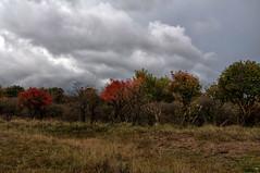 2012 10 24 AWD Autumn Trees