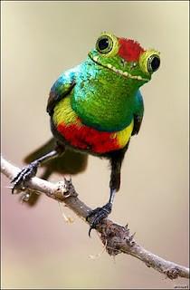 Funny Animal frog bird