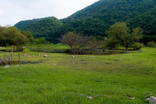 湿原のような青野ダム最上流部